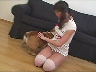 Socking Little Caprice with English bulldog